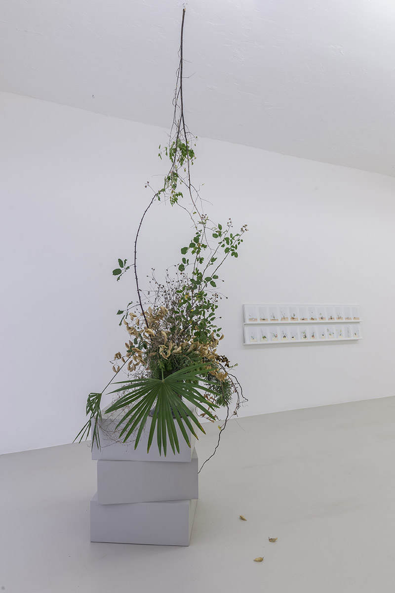Martina della Valle in collaboration with Rie Ono, One flower one leaf #3, Photo serie, cut flowers, vase, variable dimensions, 2017. Photo Guadagnini ©argekunst